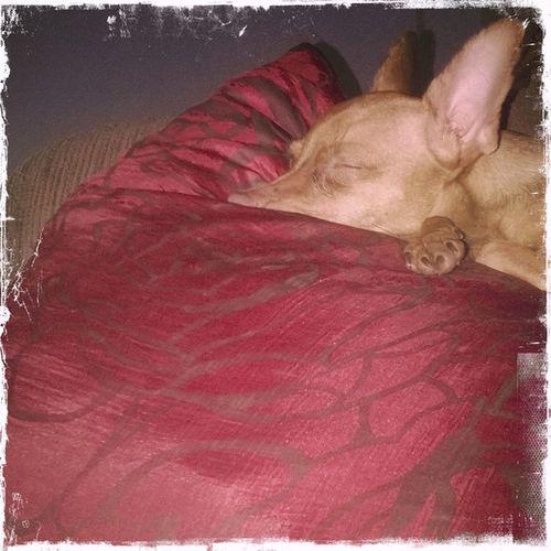 sleeping, but alert. Ever. Dogs Sundays Hipstamatic Oggl Raymarkii Kodotxgrizzled