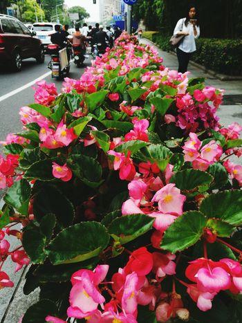 Walking Around Go To Work Pink Flower