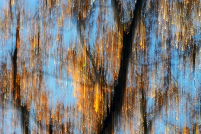 Full frame shot of trees against plants