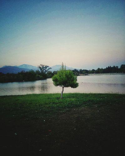 Small Tree Lake Nature California Santa Fe Dam
