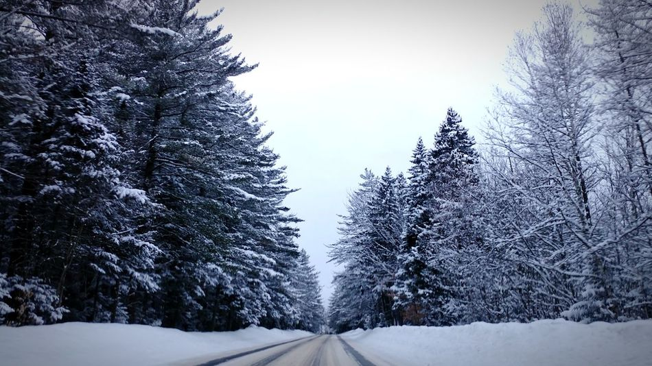 Snow Covered Trees in North Conway, NHEyeEmNewHere Snow Winter Tree Pine Tree Forest Nature Tranquil Scene No People Beauty In Nature Road Journey New Hampshire, USA North Conway Kangamangus EyeEm Selects The Week On EyeEm