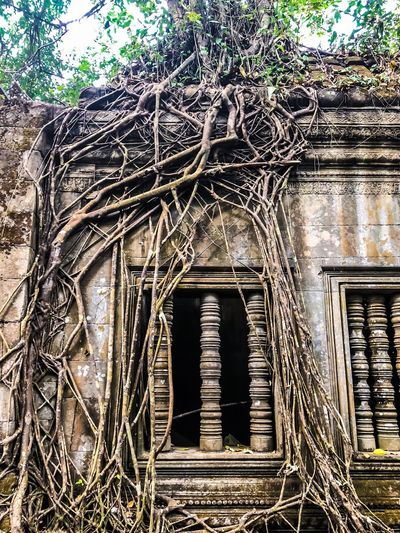 Temple Cambodia Siemreap Laputa: Castle In The Sky Laputa Architecture Tree Old Ruin Day Building Exterior Built Structure No People