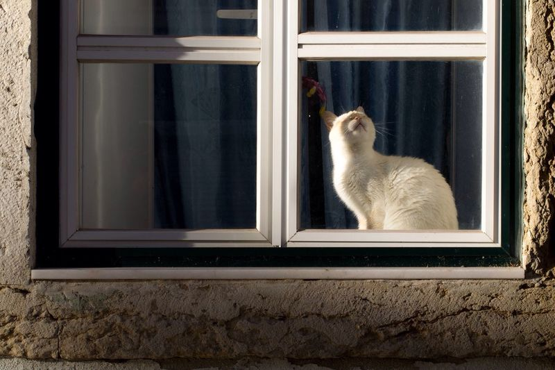 Cat sitting on window sill of house