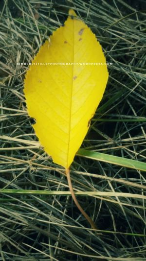 An old leaf
