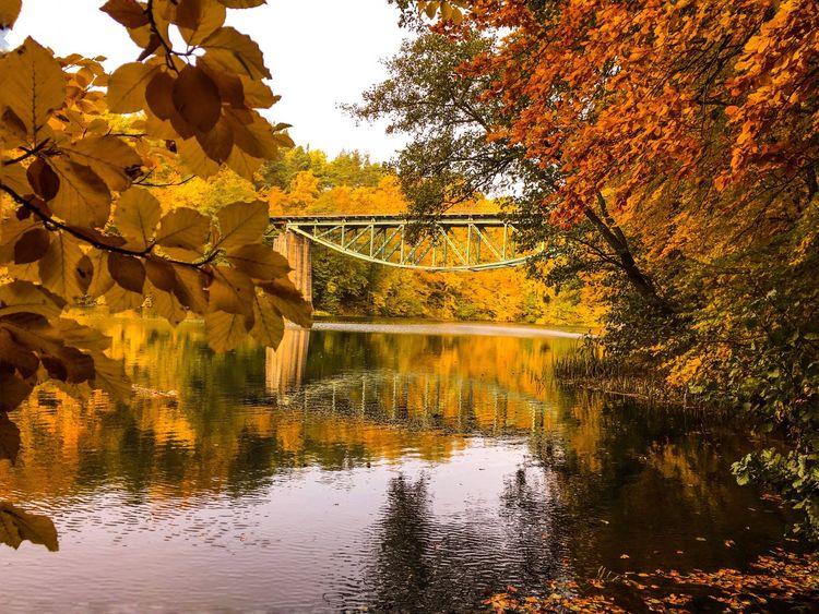 Bridge Reflection Water Reflections EyeEm Nature Lover Nature Autumn Landscape EyeEm Best Shots Trees EyeEm Best Shots - Landscape IPS2015Water