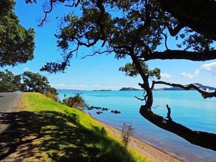 New Zealand Scenery New Zealand Beauty Pohutukawa Serene Beach Kawakawa