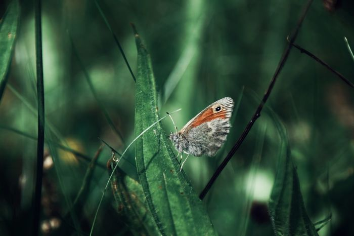 One Animal Animal Wildlife Animals In The Wild Insect Animal Themes Nature No People Close-up Focus On Foreground Day Spider Web Outdoors Trapped Fragility Beauty In Nature Butterfly EyeEm Selects EyeEmNewHere The Week On EyeEm Netherlands Falter Schmetterling Makro