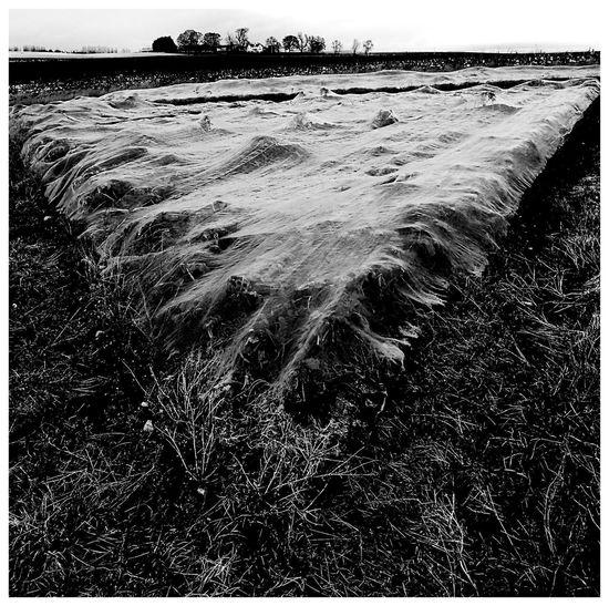 Blackandwhite Agriculture Photography Crop Netting Kirriemuir Farmland