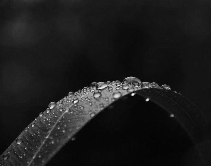Maximum Closeness Water Rain Close-up Macro Wet Beauty In Nature RainDrop No People Rainy Season Outdoors
