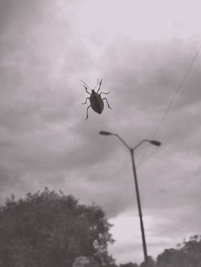 Low angle view of insect on tree against sky