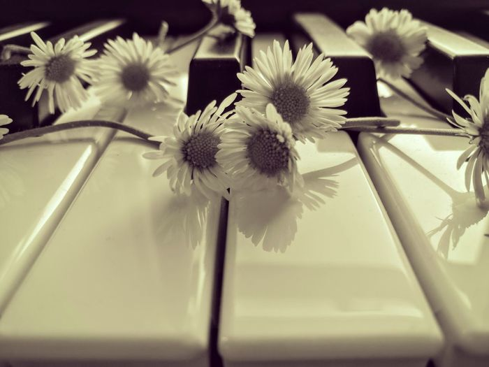 Sweet music Daisies Are My Favorite Daisy Flower Check This Out Daisy Chain Piano Keys Piano Piano Key Keys Music Sweet Moments Sweet Things Capture The Moment Daisies Sweetness Sweet Music. HuaweiP9 Huaweiphotography Huawei TakeoverMusic Piano Moments