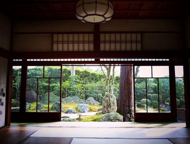 真正極楽寺 真如堂 Kyoto,japan Kyototravel Tranquil Scene Travel Destinations Japanese Temple Japan Photography Window Indoors  No People Day Built Structure Tree Architecture Beauty In Nature