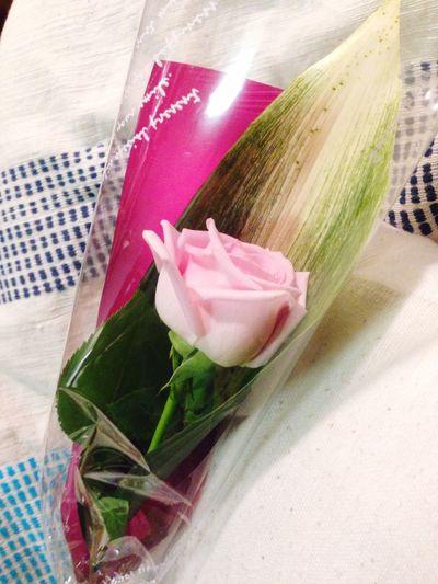 Pink Rose So surprised!