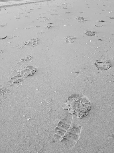 Outdoors Beach Sand Paw Print Nature High Angle View Animal Track Backgrounds Day No People Close-up