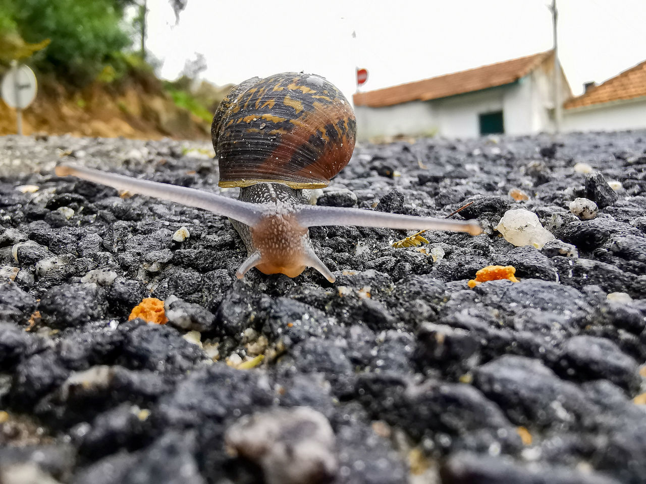CLOSE-UP OF SNAIL ON A SURFACE