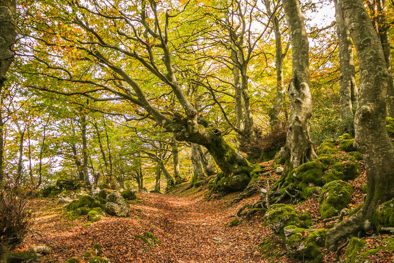 Pathway in the autumn enchanted forest Autumn Autumn colors Fairy Tale Trekking Wildlife & Nature Beauty In Nature Beech Beech Forest Enchanted  Enchanted Forest Foliage Forest Italy Landscape Leaf Leaves Magic Monte Cucco Mountain Nature Park Path In Nature Pathway Umbria WoodLand