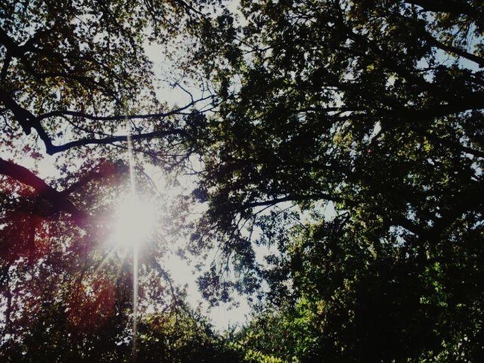 Walking Around Trees Sun Green EyeEm Gallery EyeEm Best Shots EyeEm Nature Lover EyeEm Best Edits Sunny Day Tree_collection