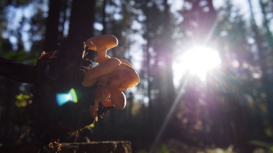 Shrooms Lens Flare Music Sunlight Musical Instrument Guitar Sunbeam Focus On Foreground Back Lit Arts Culture And Entertainment Tree Outdoors Musician One Person Human Body Part Only Men Plucking An Instrument Guitarist Forest Men Adults Only