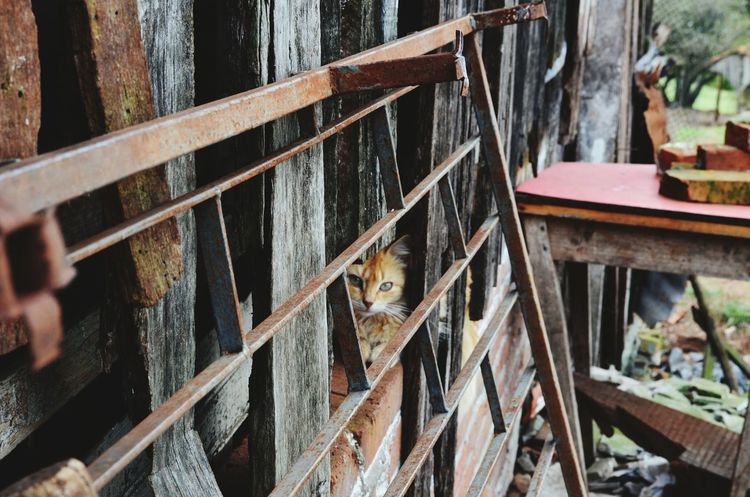 He spy me while I spy him. Taking Photos Hello World Hi! Cats Riograndedosul Brasil ♥ Photography