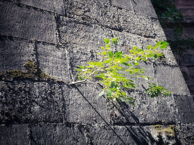 Wood Wood - Material WoodLand Green Green Color Beauty In Nature Beautiful Nature_collection Nature Photography Rocks Rock Formation Rock Architecture Old Old Buildings Old Town Backgrounds Full Frame Textured  Close-up LINE Architectural Design Marking Growing Young Plant