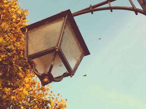 Autumn Fall Lamp Spider Street Tree No People