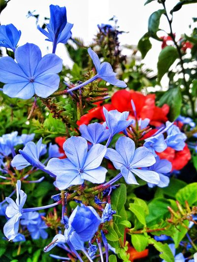 Colorful Flowers Nature