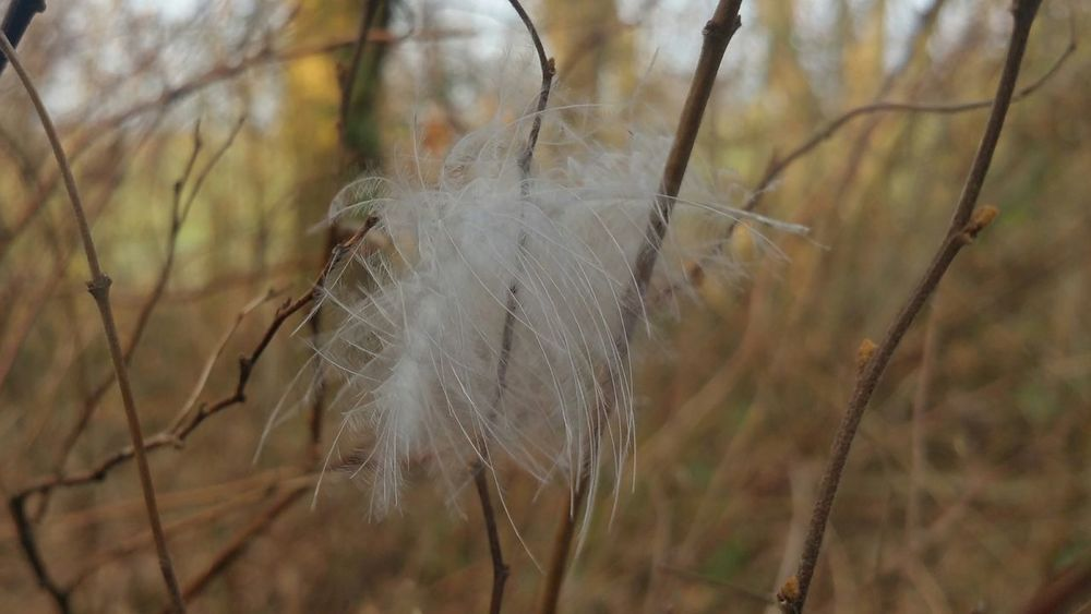 Feather Of A Bird Nature Trapped No People Focus On Foreground Close-up Day Outdoors