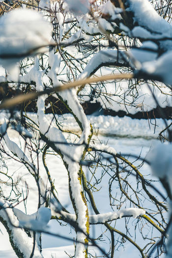 Snow in the trees Tree Branch Winter Plant Cold Temperature Snow No People Bare Tree Nature Beauty In Nature Tranquility Day Focus On Foreground White Color Frozen Water Selective Focus Outdoors Close-up Dead Plant Snowcapped Mountain