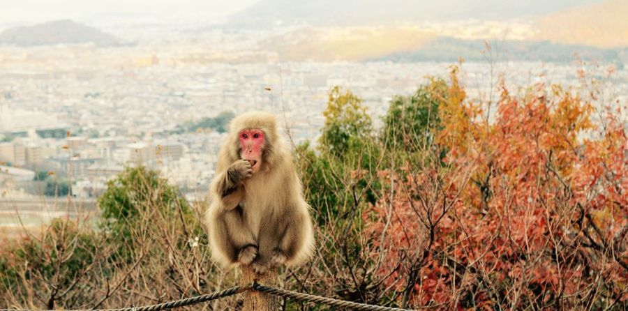 Animal Themes Monkey Mammal Sitting No People Primate Animals In The Wild Plant Nature One Animal Day Outdoors Water Sky