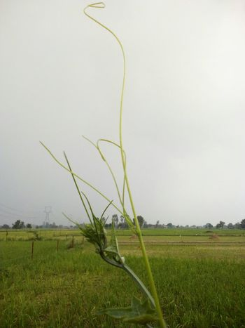 Agriculture Field Growth No People Nature Cereal Plant Outdoors Grass Irrigation Equipment Day Rural Scene Water Beauty In Nature