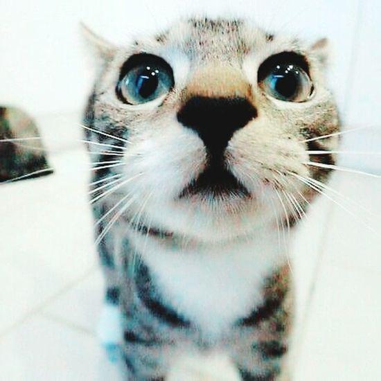 My new daughter. She has sexyeyes same as me.😂 Daughter My Daughter ♥ Cat Cat Lovers Cat Eyes Cat Watching So Cute :) Cats Of EyeEm First Eyeem Photo Eyeem Nice Shots