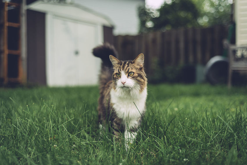 Animal Themes Building Exterior Close-up Day Domestic Animals Domestic Cat Feline Grass Looking At Camera Mammal Nature No People One Animal Outdoors Pets Portrait