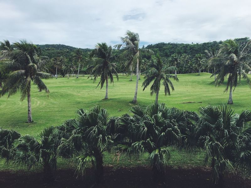 Saipan Cnmi Northern Mariana Islands Vscocam VSCO IPhoneography Palm Tree Plant Tree Sky Green Color Cloud - Sky Growth Nature Beauty In Nature Land Grass Landscape Field Tranquil Scene Tranquility Environment No People Outdoors Day Scenics - Nature