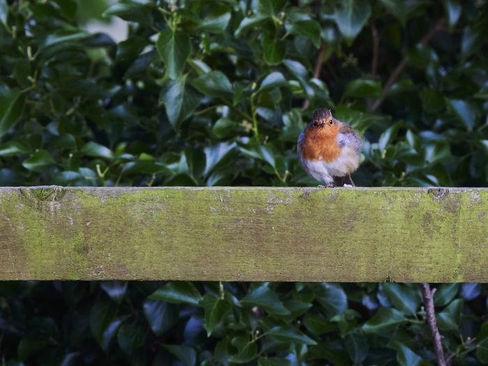 Bird perching on wooden fence