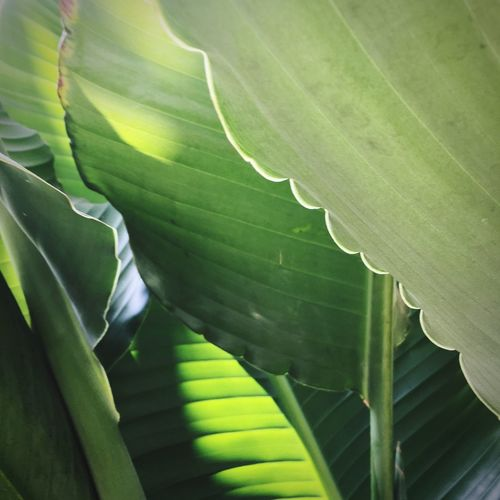 Plant Life Garden Leaf Plant Part Green Color Plant Growth Close-up No People Beauty In Nature Nature Full Frame Backgrounds Natural Pattern Outdoors Leaves Freshness Day
