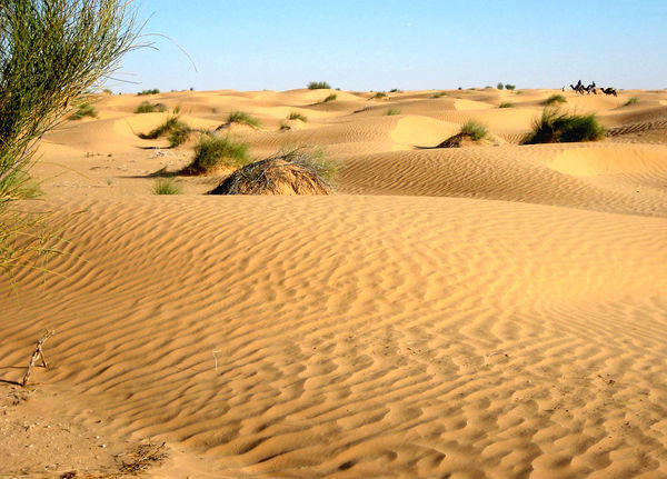 Trip through the desert Arid Arid Climate Arid Landscape Barren Beauty In Nature Desert Desert Beauty Horizon Over Land Landscape Nature Non-urban Scene Remote Sahara Sand Sand Dune Scenics Tranquil Scene Tranquility Travel Photography Tunesien