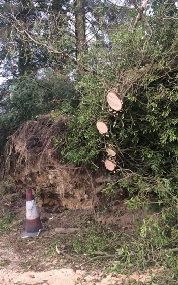 Aftermath Of Hurricane Ophelia 2017 Ireland Growth Day Outdoors Nature Tree No People Forest Hurricane - Storm Roots Of Tree EyeEmNewHere EyeEm Best Shots EyeEm Masterclass Eyeem Storms