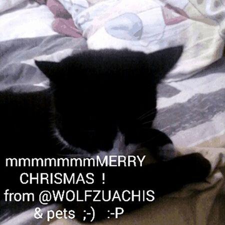 Merry Xmas @wolfzuachis Wolfzuachis Wolfzuachis&pets ;-) :-P