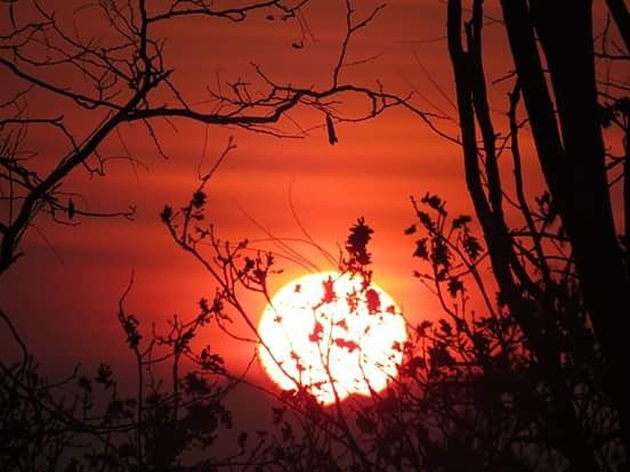 sunset, silhouette, tree, sun, outdoors, nature, branch, sky, no people, scenics, bare tree, beauty in nature, red, moon, dawn, illuminated