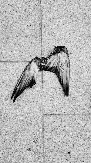 Wings Fallen