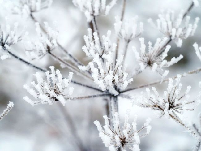 Naturephotography Nature Beauty Ice Crystals Iced Winter Nature Day Frozen Nature Cold Weather Beautiful Nature Frozen Plant Snow Covered Snow Winter Cold Temperature Tree Nature Frozen White Color Frost Ice Backgrounds Snowflake Branch Freshness Beauty In Nature Plant Fragility