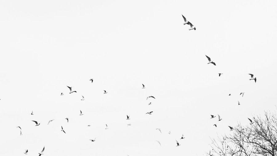 EyeEm Birds AMPt - Escape
