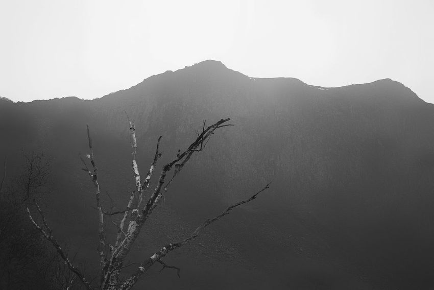 China Photos 백두산 Landscape Landscape_Collection Tree TreePorn Hugging A Tree Treepark Silhouette Korean Historical Place Historic Site Taking Photos Bnw Bnw_life Black And White Blackandwhite Travel Streamzoofamily Monochrome Photography The Great Outdoors - 2017 EyeEm Awards