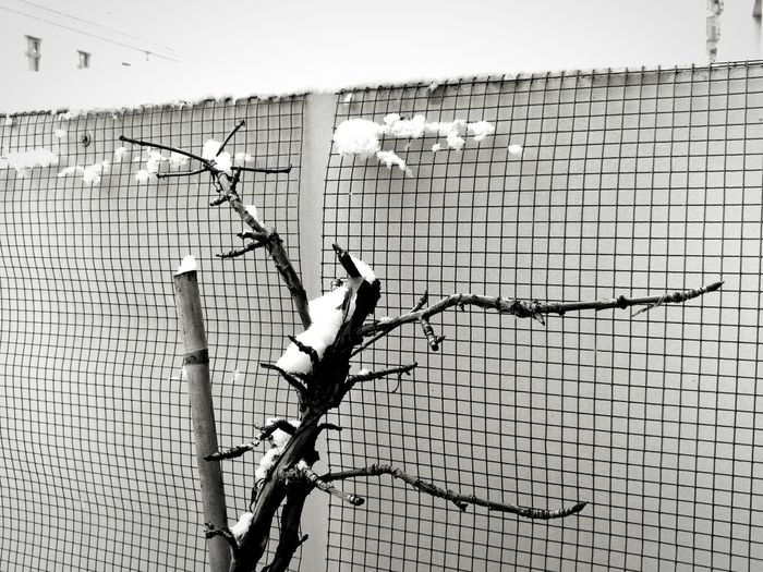 Close-up of birds on chainlink fence
