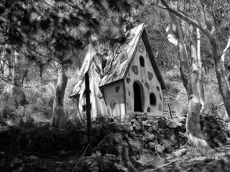 Architecture Beauty In Nature Black And White Photography Brother Grimm Building Exterior Built Structure Day Forest Photography Fun Times Growth Knusperhäuschen Magical Forest Mount Gladstone Nature No People Outdoors Small House In The Woods Storytime Tree Black & White Life Is A Journey Inspirations Everywhere. Nature On Your Doorstep