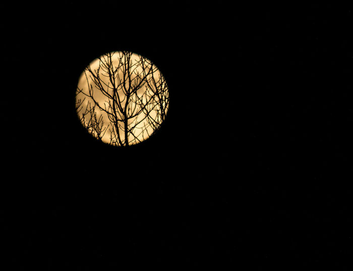 Silhouette of leafless barren tree branches on creeping across on Supermoon Alone Astronomy Autumn Autumn Colors Barren Trees Celestial Circle Cover Creepy Darkness And Light Event Full Moon Lunar Moon Light Moonstruck Night Night Photography Round Shape Satellite Shadows & Lights Silhouette Silhoutte Photography Super Moon 2016 Supermoon Trees Welcome To Black BYOPaper! The Great Outdoors - 2017 EyeEm Awards The Great Outdoors - 2018 EyeEm Awards The Photojournalist - 2018 EyeEm Awards