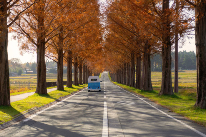 Transportation Tree Road Mode Of Transportation Motor Vehicle Autumn Car Nature Treelined No People Outdoors Plant Direction The Way Forward Motion Diminishing Perspective Dividing Line