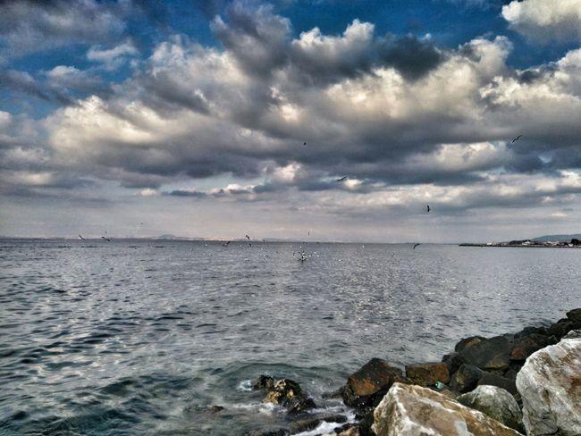 Yalovasahili Yalovasahil Yalova Deniz Martı Gökyüzünde Bulutlar