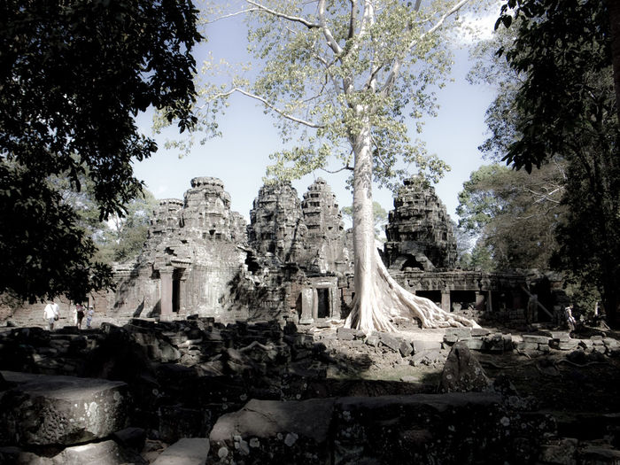 Magic Angkor Wat Tourism Tourist Attraction  Travel Photography Magic Angkor Wat, Temples, Kmer Culture Buddha Statue Buddhist Temple Cambodia Cultures Day History Low Angle View No People Outdoors Place Of Worship Religion Sky Statue Travel Travel Destinations Tree Spirituality Historic Building Archaeology Old Ruin Ancient