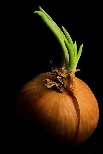Onion Food And